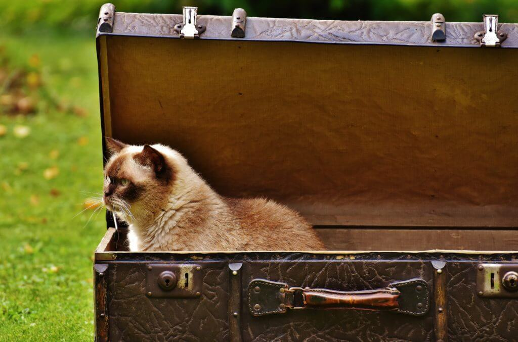 Out of the Box - Cat out of the Box