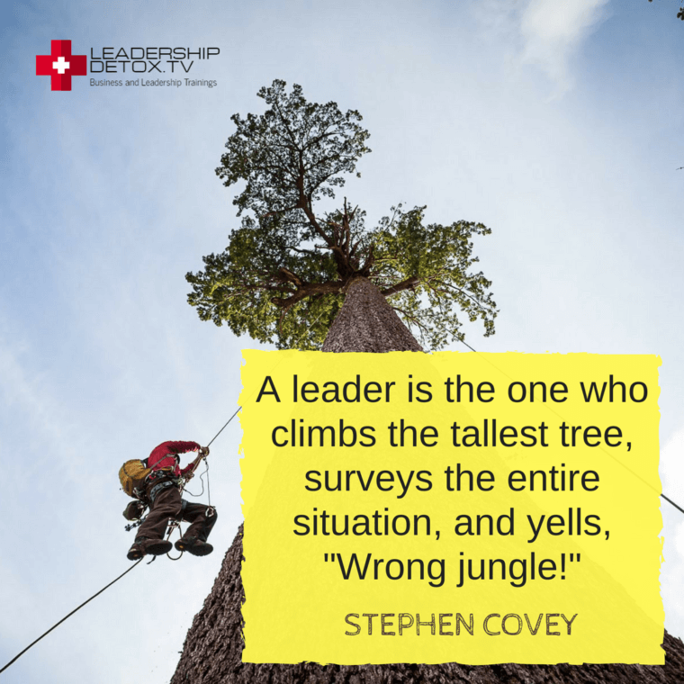 "Stephen Covey quote on priority: A leader is the one who climbs the tallest tree, surveys the entire situation, and yells, ""Wrong jungle!"""